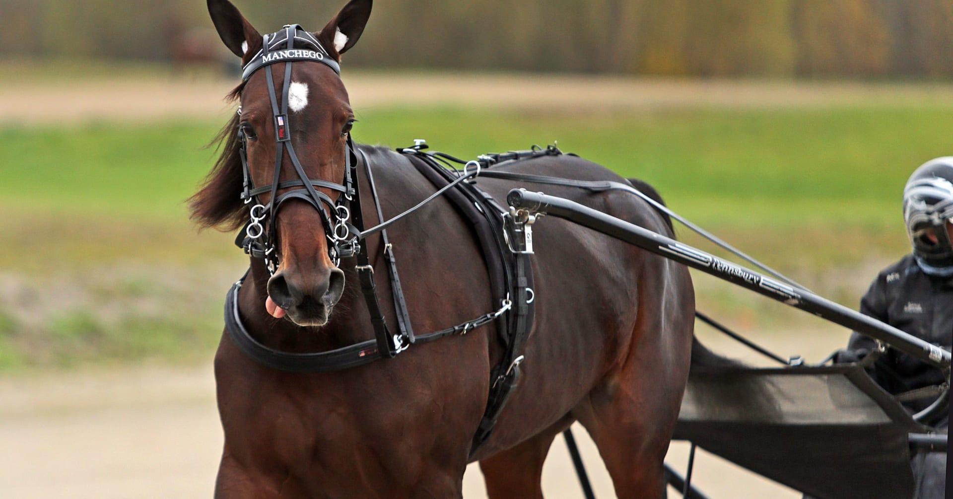 Kval på Meadowlands – då glänste svenskarnas hästar