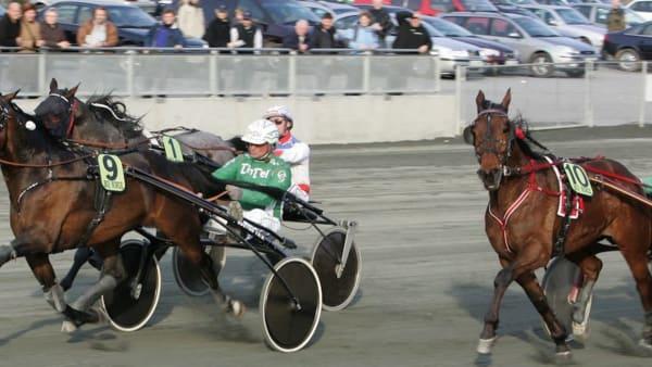 Foto: Anders Kongsrud/hesteguiden.com/TR Bild