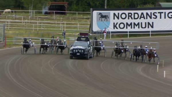 Silver Jossan vinner SM för kallblodiga ston den 12 september 2020