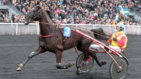 Foto: MIA TÖRNBERG/TRAVRONDEN
